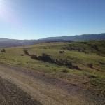 Fort Ord 10k mile 4