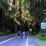 Avenue of the Giants Run