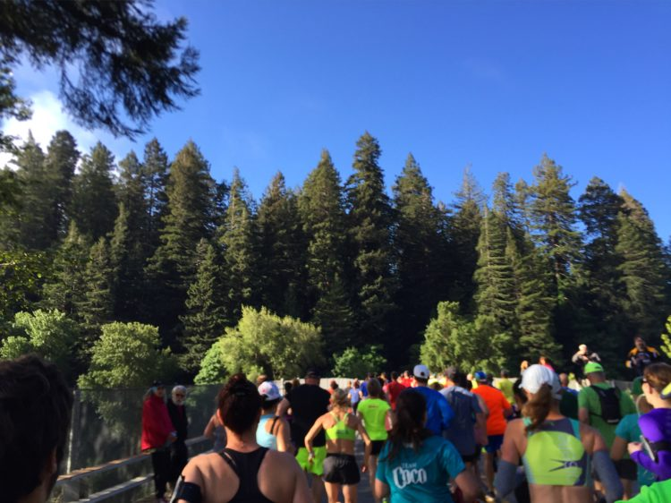 Avenue of the Giants Run Start