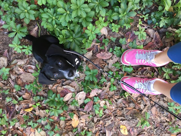 puppy and running shoes